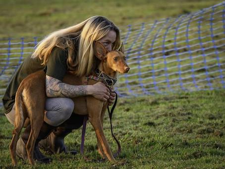 Rethinking  Canine Communication.