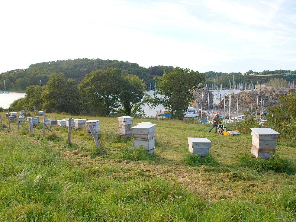 Les pratiques respectueuses de l'environnement et des abeilles à La Maison de l'Abeille