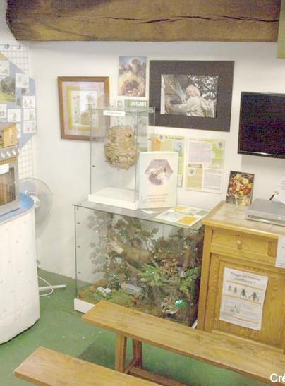 Exposition sur le monde des abeilles à La Roche-Bernard