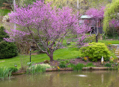 Purple in the Garden, Soul & Mind