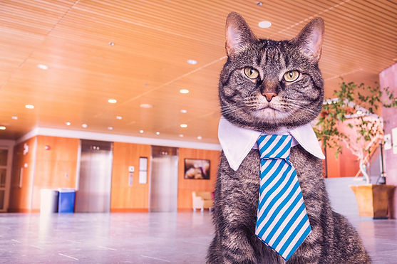 Office cat with a tie