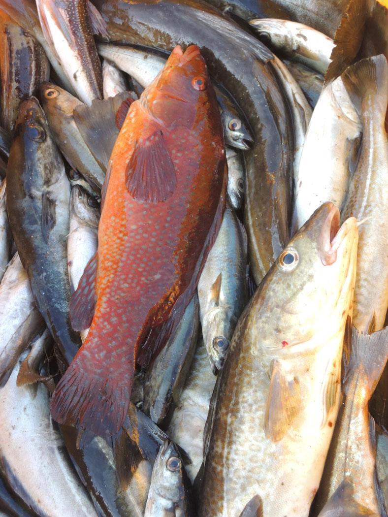 Colourful Catch