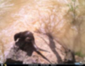 OtterBAV7.jpg