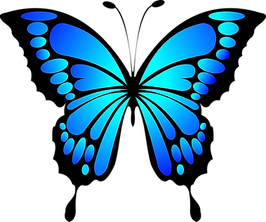 butterfly-2028591_1280.png