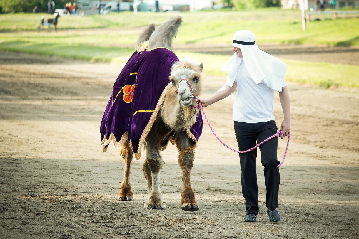 КСК Гренада Верблюд Бархан