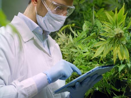 BioAg Group Announces Timeline for Second Harvest of 2020