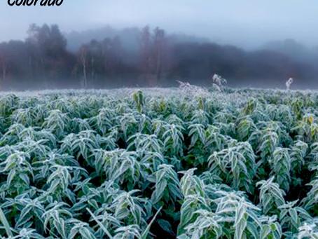 BioAg Group Enjoys Good Growing Conditions