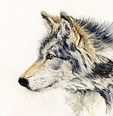 AG007-Anne-Gilbert-Timberwolf-print-450x