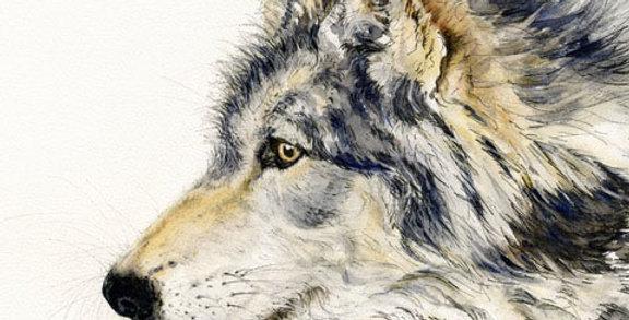 Anne Gilbert - Timberwolf