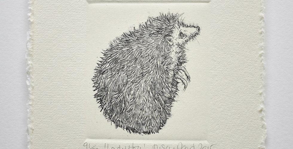 Alison Read - Lady Hog