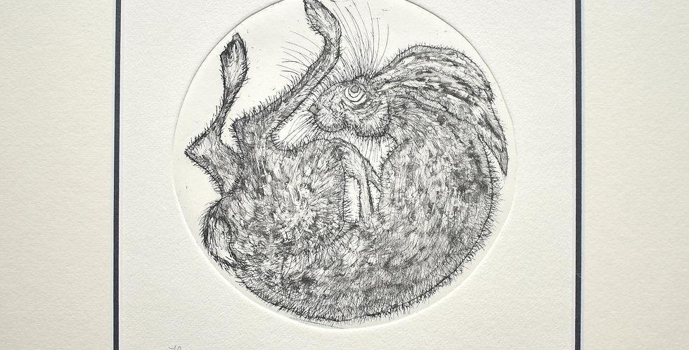 Alison Read - Hare Ball