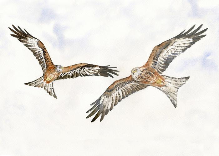 AG006-Anne-Gilbert-Red-Kites-print-360x4