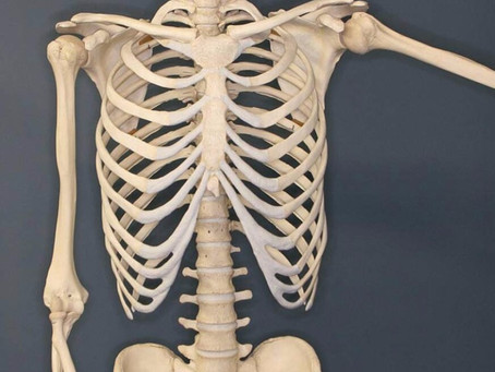 How amazing is our skeletal system?