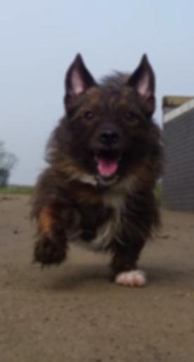 jensondog