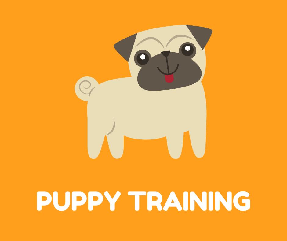 1 to 1 Training - Puppy
