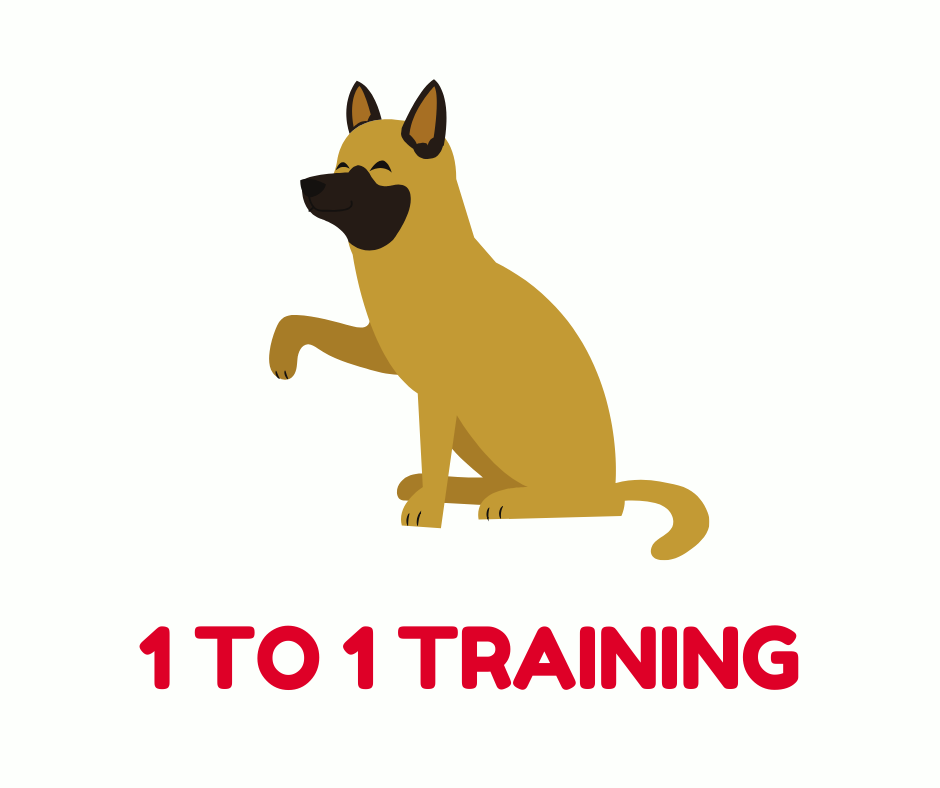 1 to 1 Training - Adult