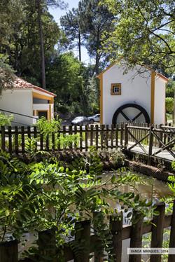 MÃE D'ÁGUA - Carregueira
