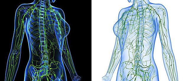 lymphatic-system-side-by-side.jpg