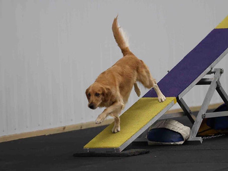 Agility FAST Open Title