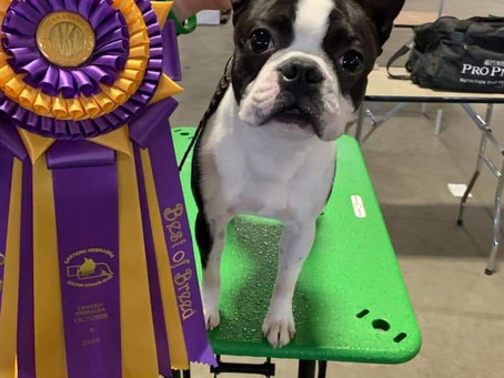 Bosart and Giljas Royal Commander Best In Speciality Show