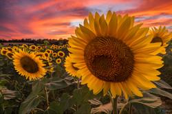 Sunshine at Sunset by John Robichaud