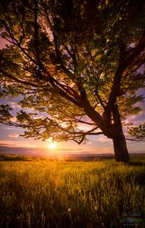 A TREE OF LIGHT