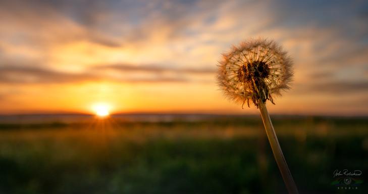 A DANDY SUNSET