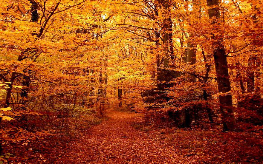 Pensées d'automne Df1d40_1dd6bb956d37426784ce16c1c93bf287
