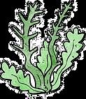 weed%203_edited.png