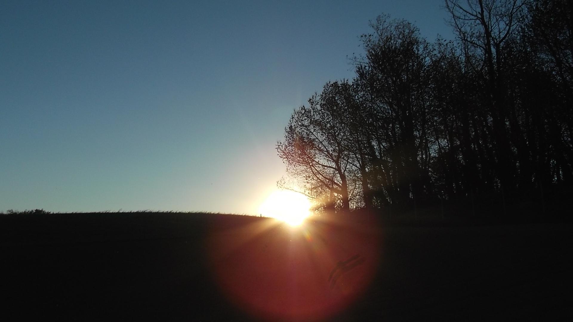 sole sullo zafferano