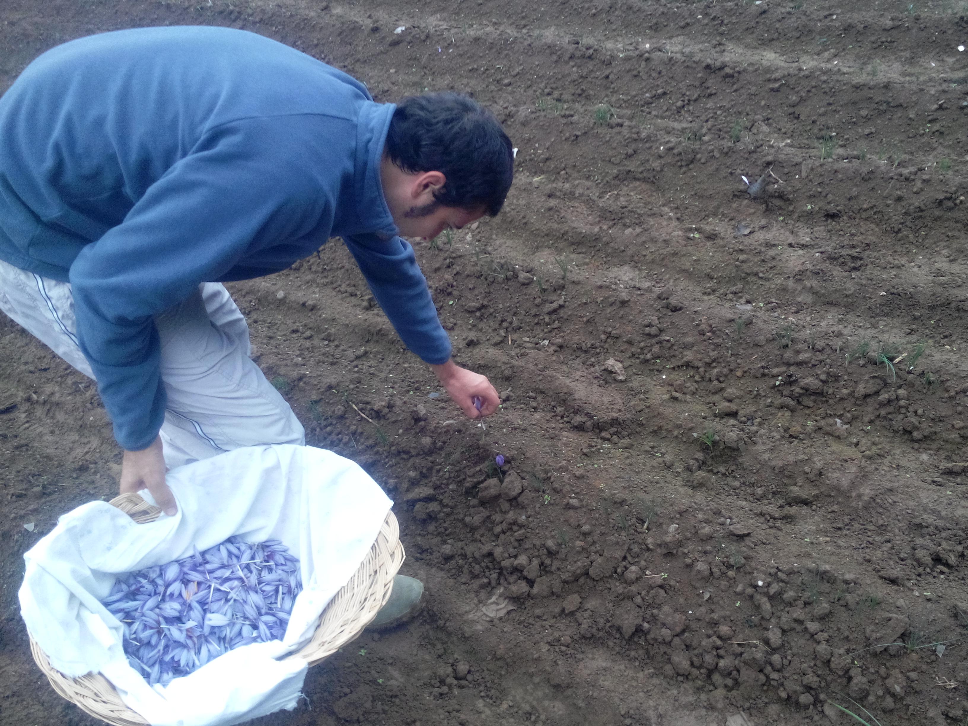 raccolta a mano dei fiori