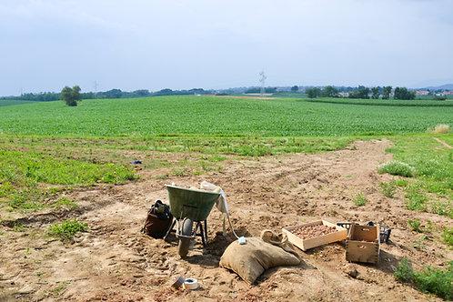 Servizio i semina dei bulbi e raccolta dei bulbi- Quotazione giornaliera.