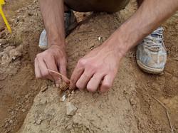 bulbi i crocus alla semina
