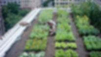rooftop garden.jpeg