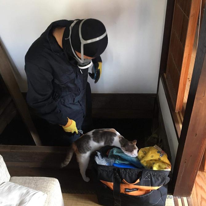助手の猫ちゃん