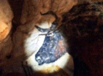 Grotto Bulls of Ancient Art
