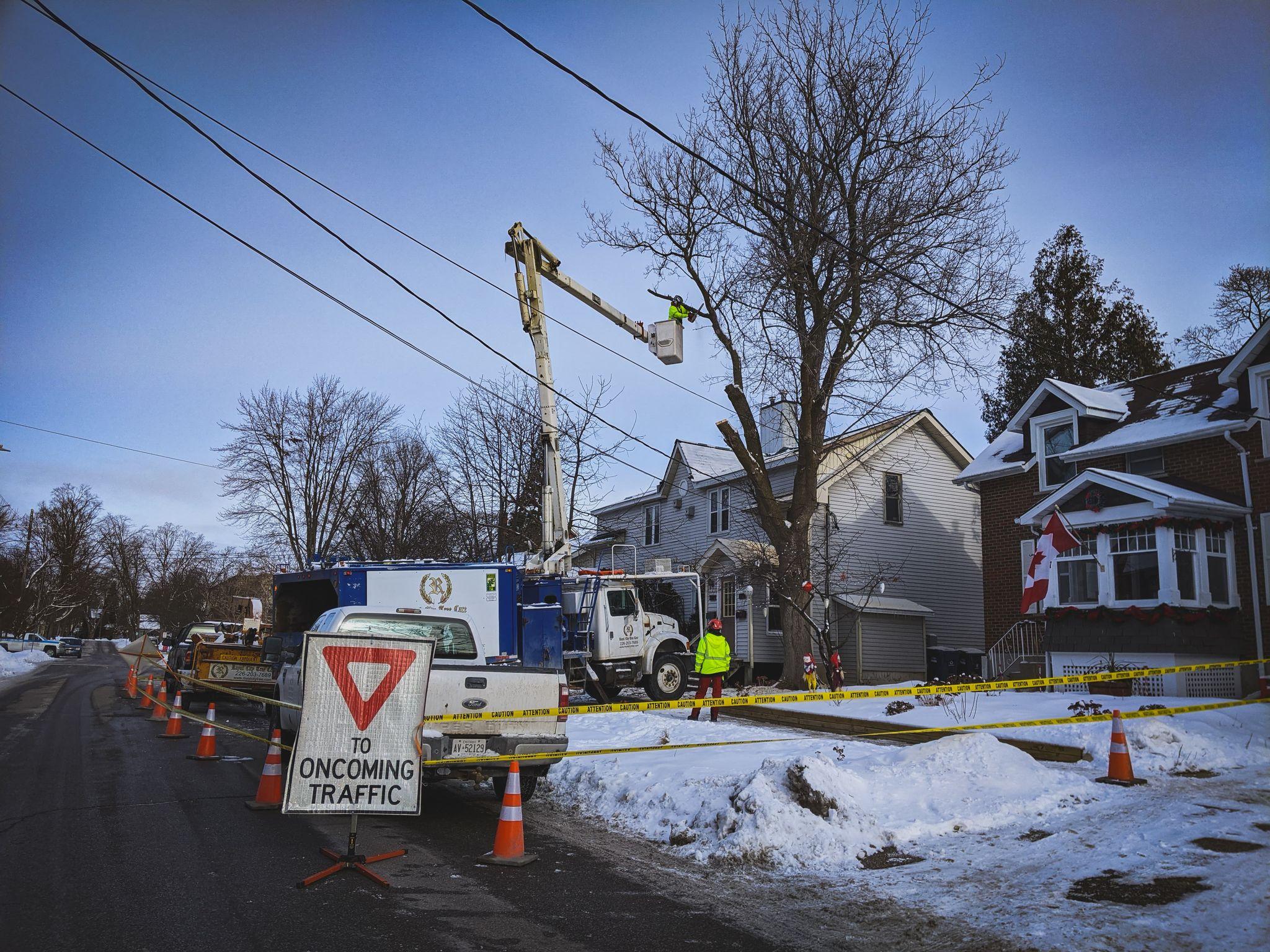 Manitoba Maple Removal near Service Wire