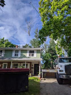 Poplar Crane Removal