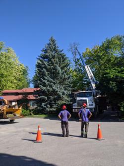 Ash Crane Removal