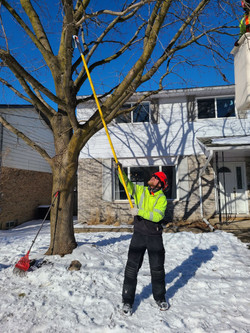 Kyle Scrapping off Gypsy Moth egg masses