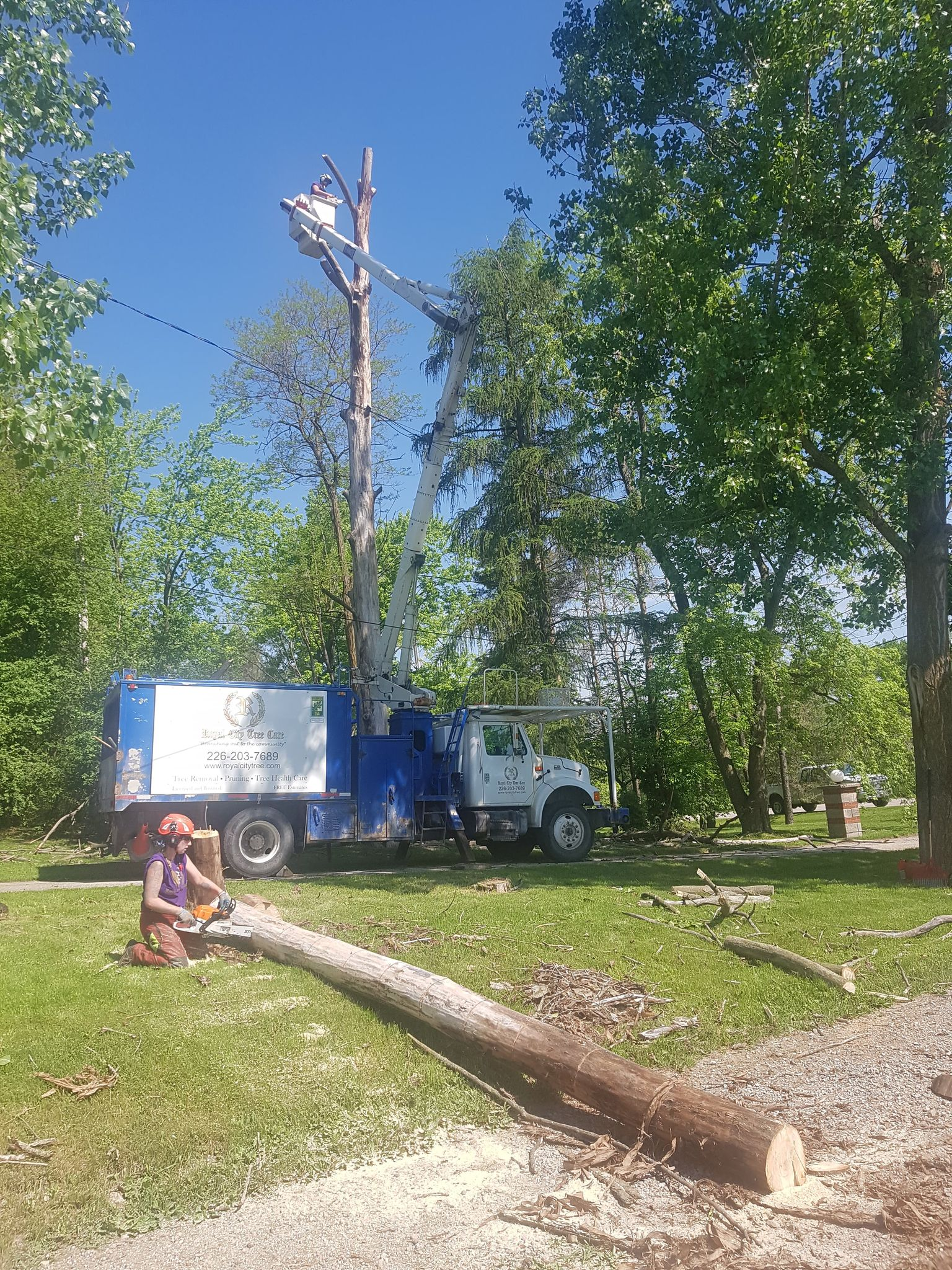 Removal of Dangerous Dead Poplars