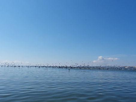 Prasilenkiant su kormoranais, kurie skrenda 70 km/h greičiu