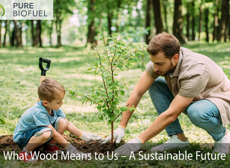 What Wood Means to Us – A Sustainable Future