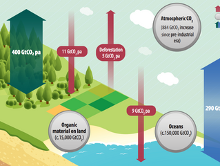 Increased role for Biomass in UK energy