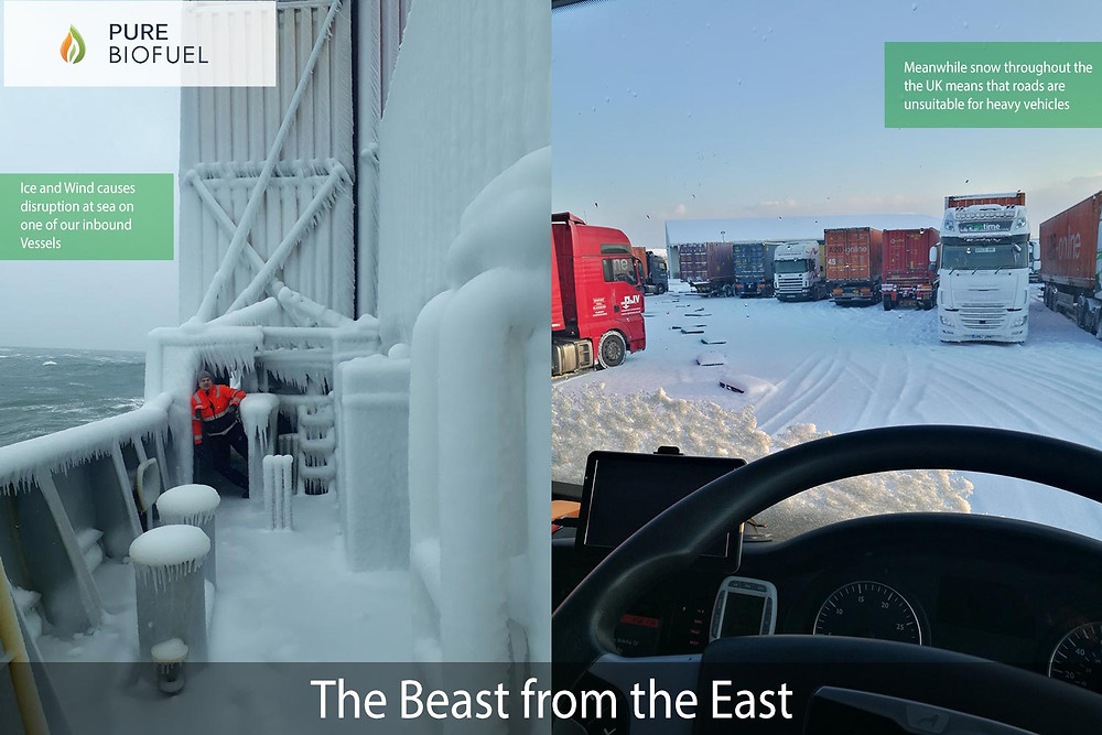 The Beast from the East