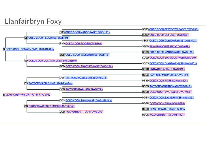 FoxyPed.jpg