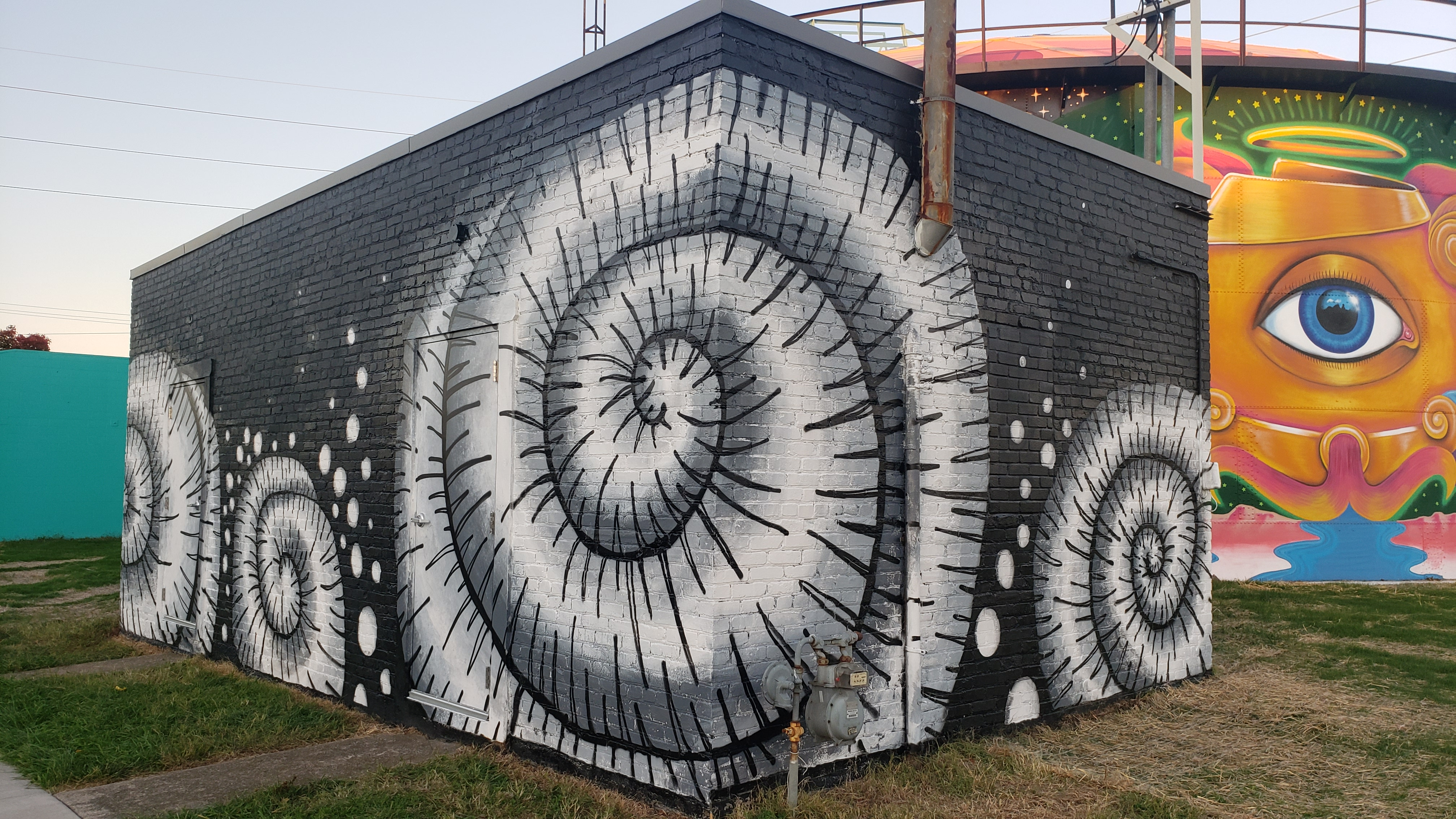 Ammonite Fossil Mural - 2019