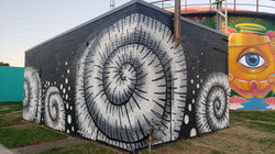 """Ammonite Fossils"" Mural"