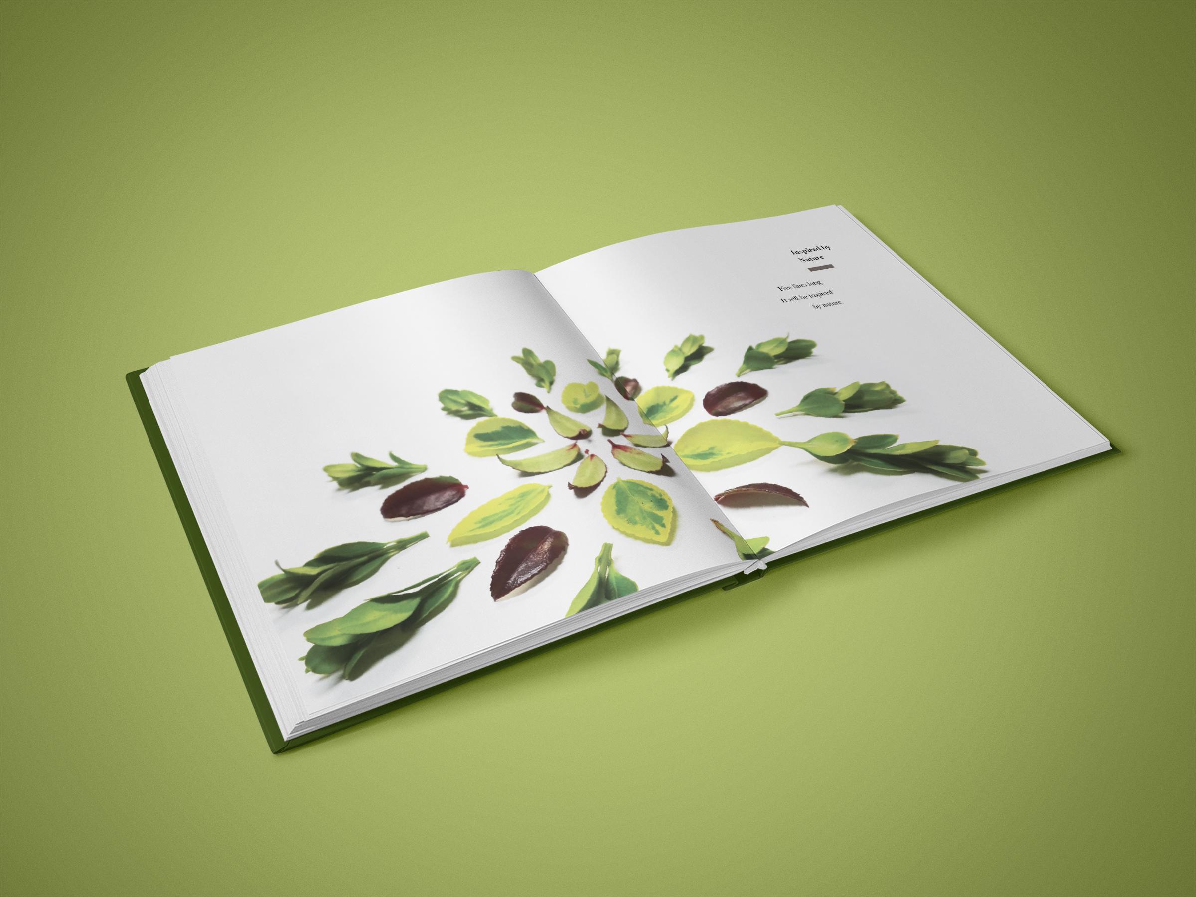 Mandala Book Pages