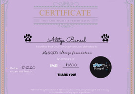 Help the Strays Certificate